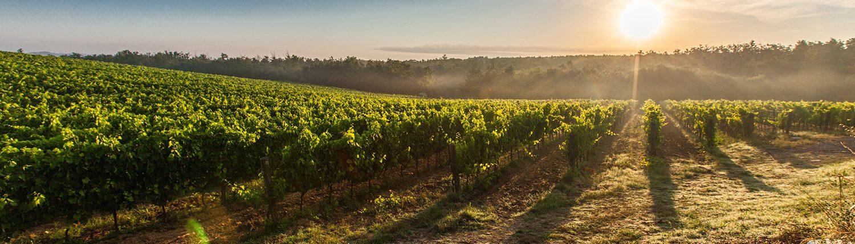 Wijngebied Toscane
