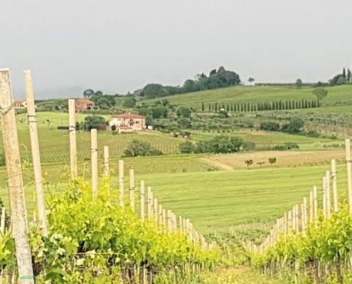 Biodynamische wijn_italiaansewijn_tastemorewine