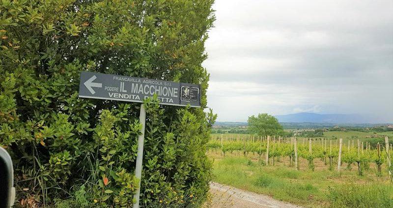 wijngaard_Montepulciano_italiaanserodewijn_tastemorewine