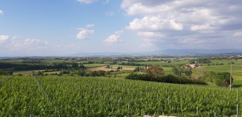Il macchione-montepulciano-wijngaard-tastemorewine
